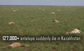 Mrtvý Antelope v Kazachstánu