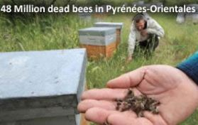 Dead bees in France