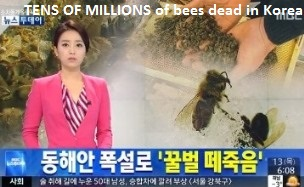 Dead Bees in Korea