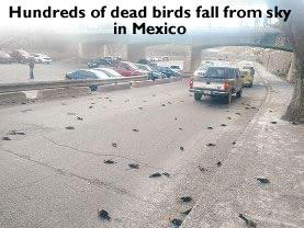 Dead Birds Mexico