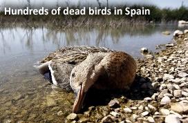 Dead Birds in Spain