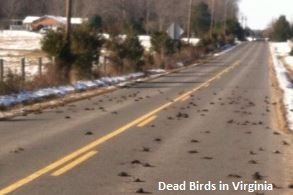Dead Birds in Virginia