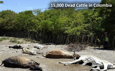 dead-cattle-colombia.jpg
