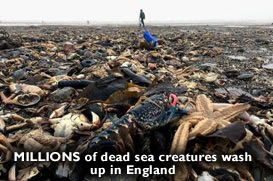 Dead Creatures Yorkshire