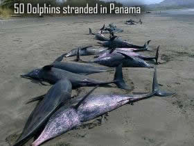 Ocean life is dying in mass and no one knows why dead dolphins in panama publicscrutiny Images