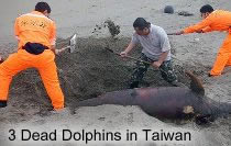 Dead Dolphins in Taiwan