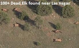 Dead elk in Las Vegas