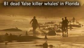 Les fausses baleines mortes en Floride