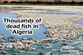 Dead Fish Algeria
