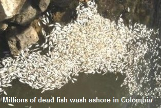 Dead Fish in Colombia