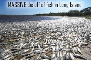 Dead Fish in Flanders Bay