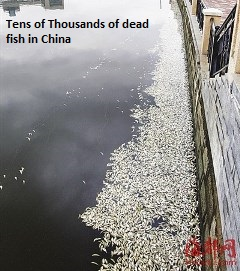 Dead Fish in Fuzhou