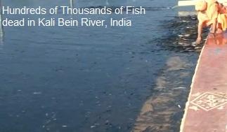 Dead Fish Kali Bein
