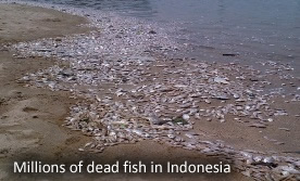 Dead fish in Jakarta