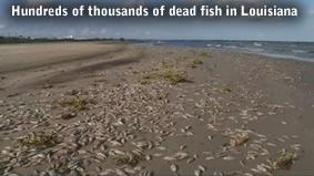 Dead fish in Louisiana
