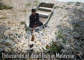 Mrtvé ryby v Malajsii