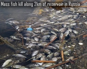 Dead fish in Russia