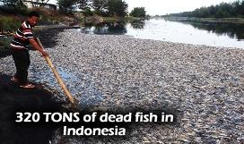 Dead Fish Sragen