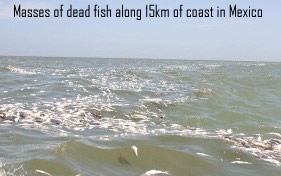 Dead fish in tabasco