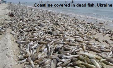 dead fish in Ukraine