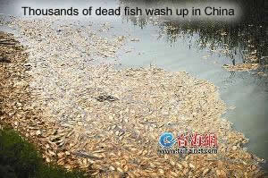 Dead Fish in Xiamen