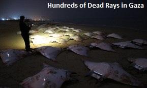 Dead Rays Gaza