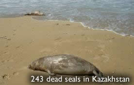 Dead seals in Kazakhstan