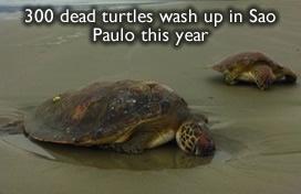 Dead Turtles Brazil