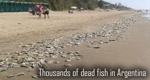 Ryby mrtvý v Argentině