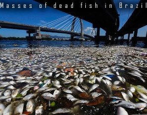 Mrtvé ryby v Brazílii