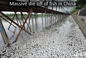 Fish dead in china
