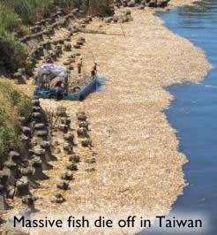 Fish Deaths Taiwan