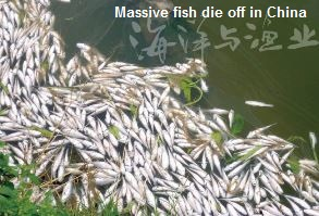 Mass Fish Die off China