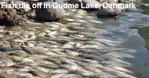 Fish Die off in Gudme