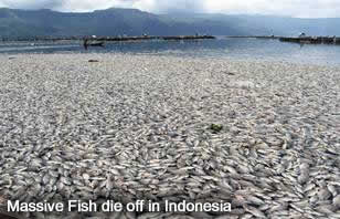 Fish Die off Indonesia