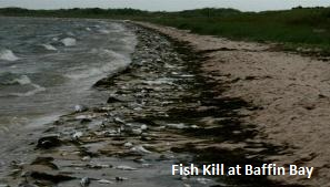 Fish Kill Baffin Bay