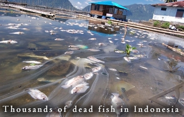 Fish kill in Indonesia