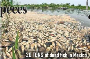 Fish kill in Mexico