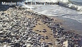 Fish Kill New Zealand