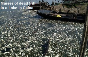 Massive Fish kill China