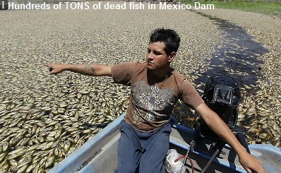 Mass Fish Kill Mexico
