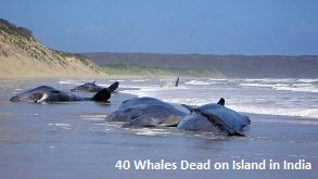 Dead Whales in India