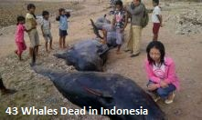 Dead Whales Indonesia
