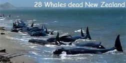 Dead Whales New Zealand